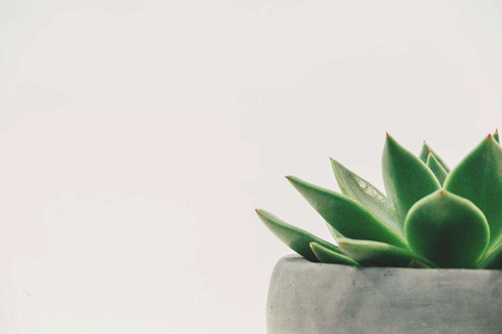 15 Piante Da Appartamento.Come Depurare L Aria Di Casa In Maniera Naturale Con 15 Piante Da